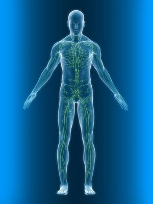gesundes Lymphsystem